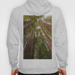 Forest Sky Adventure - 86/365 Nature Photography Hoody