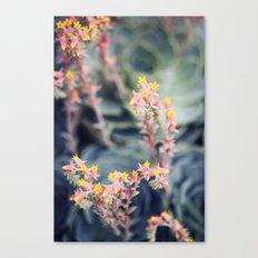 Echeveria #2 Canvas Print