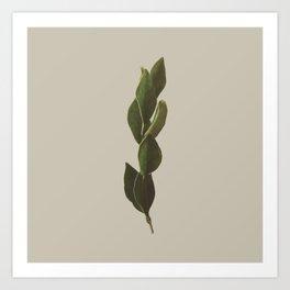 Plants Variations 2 Art Print