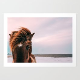 Horse #sunset Art Print