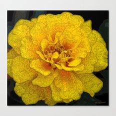 French Marigold Canvas Print