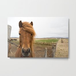 Icelandic Cognac Horse Metal Print