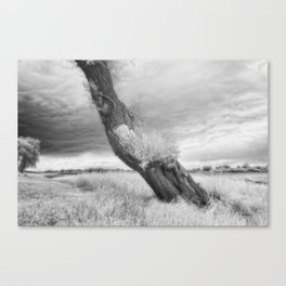Infrared photo of willow Canvas Print