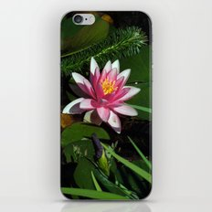 Little Water Lily  iPhone & iPod Skin