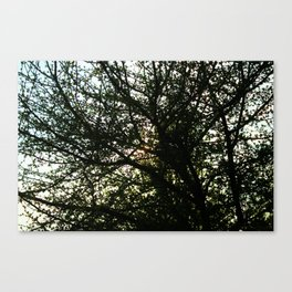 Pollock's Tree Canvas Print
