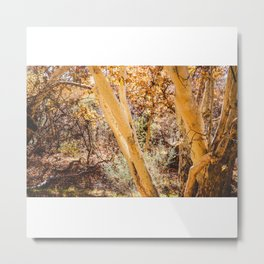 Trees in Arizona Metal Print