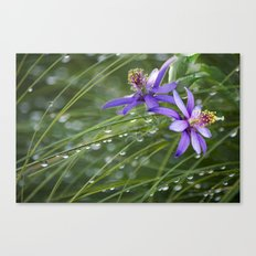 Meadow Dew Canvas Print