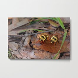 Do the Dew Metal Print
