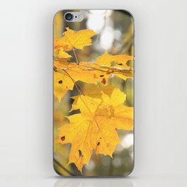 Golden leaves iPhone Skin