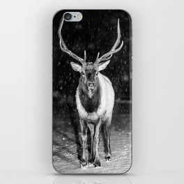 Bull Elk RMNP iPhone Skin