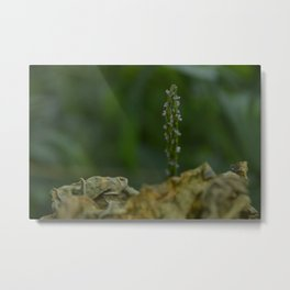 natural world Metal Print