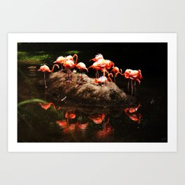 Flamingo Island  Art Print