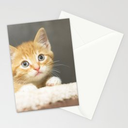 Ginger kitten playing in a box Stationery Cards