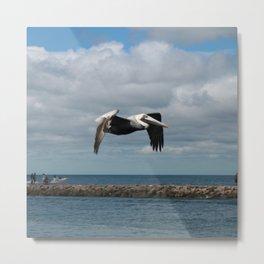 Pelican Flight DPG160301d Metal Print