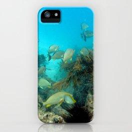 Watercolor Seascape, St John 33, USVI iPhone Case