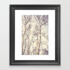 Winter Birch Trees Framed Art Print