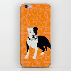 Staffordshire Bull Terrier iPhone & iPod Skin