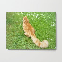 Maine Coon on Green Grass Metal Print