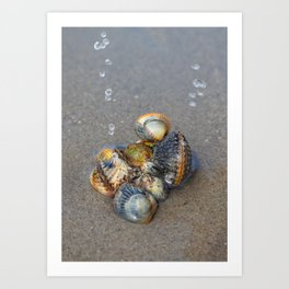 Sea pearls Art Print