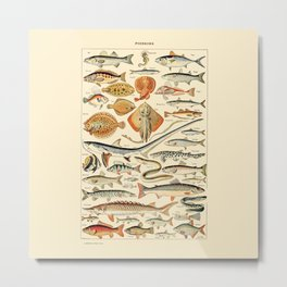 Vintage Fish Diagram // Poissons by Adolphe Millot 19th Century Science Textbook Artwork Metal Print