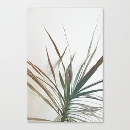Dragon tree Canvas Print