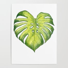 Two monstera leaves in watercolor Poster
