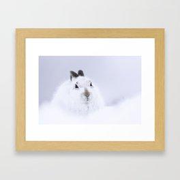White mountain hare on white snow Framed Art Print