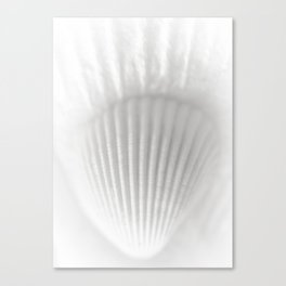 Shell&Shell Canvas Print