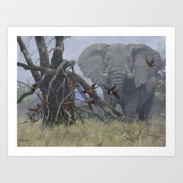 Elephant with Bee Eaters Art Print