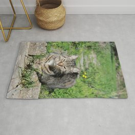 Sleepy Cat in Sunlight Portrait Photography Rug
