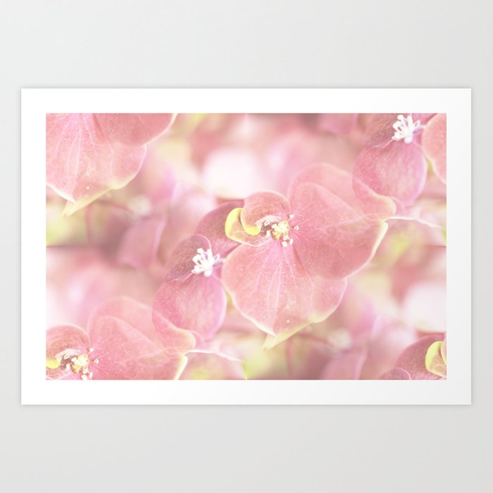 Some Soft Pink Flowers Hydrangea #decor #society6 Art Print