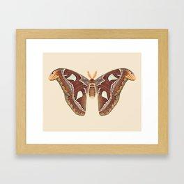 Atlas moth Framed Art Print