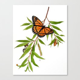 Viceroy and Willow Canvas Print