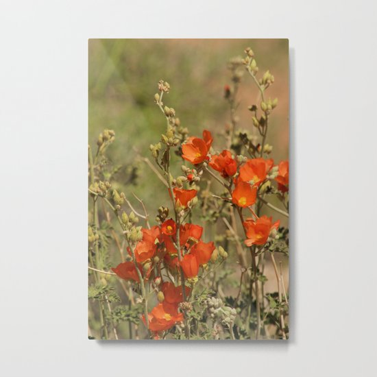 Desert Wildflower - 4 Metal Print