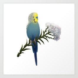 Blue and Yellow Budgerigar Art Print