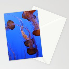 Jelly fish at the Monterey Aquarium. Stationery Cards