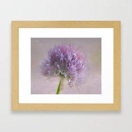 Chive Blossom Too Framed Art Print