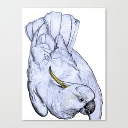 Curious Cockatoo Canvas Print