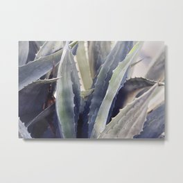 Winter Agave Metal Print