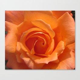 AN ORANGE ... ROSE Canvas Print
