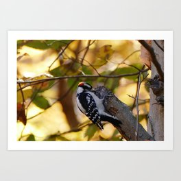 Woodpecker Burke Lake Art Print