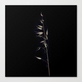 Herbarium 4 Canvas Print