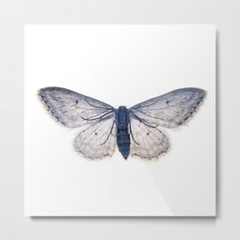 Trasparent Butterfly  Metal Print