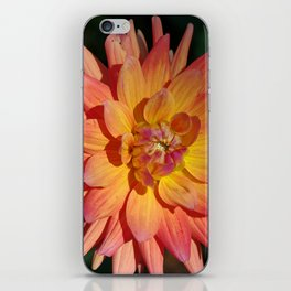 Peach and apricot Dahlia glow! iPhone Skin