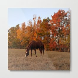 Horse Fall Days of Grazing Metal Print