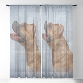 American Staffordshire Terrier  3 Sheer Curtain