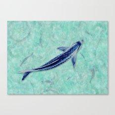 Blue Koi Canvas Print