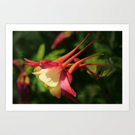 Flower - Hat of a Court Jester Art Print