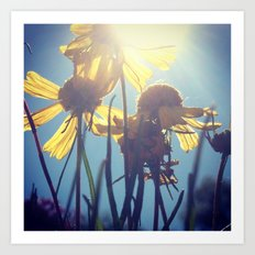 Flowers in Sunshine Art Print