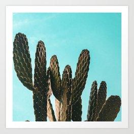 Cactus Photography Print {1 of 3} | Teal Succulent Plant Nature Western Desert Plants  Design Decor Art Print